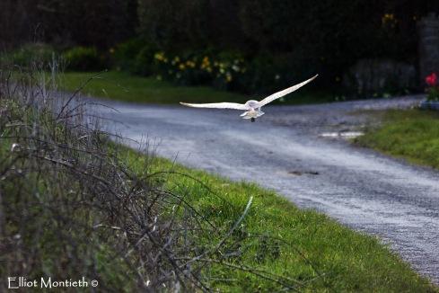 Flying angel_edited-1