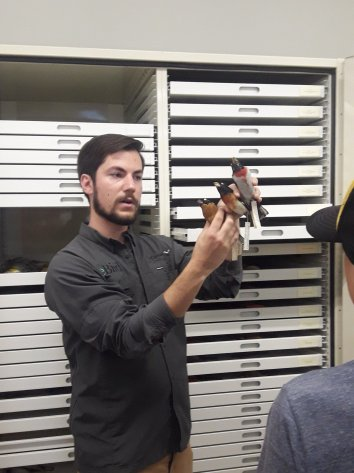 Ian demonstrating the hyrbid of a species pair; Black-headed and Rose-breasted Grosbeak